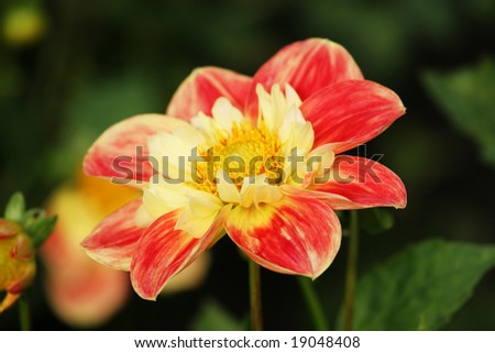 CloseUp of a beautiful spring flower