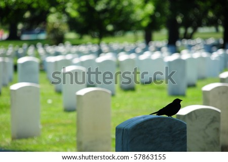 Closeup of a bird sitting on top of a tombstone with tombstone rows in the back at Arlington National Cemetery - stock photo