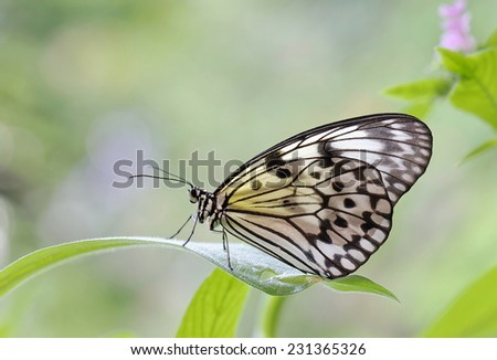 Closeup of a butterfly sitting on a leaf - stock photo