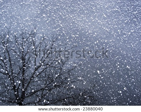 Closeup of a car window with a dusting of snow giving texture to the reflection of a tree.