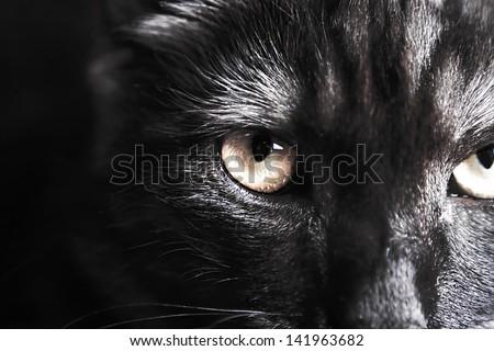 closeup of a cat's face - stock photo