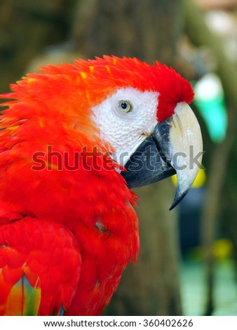 Closeup of a colorfull red parrot