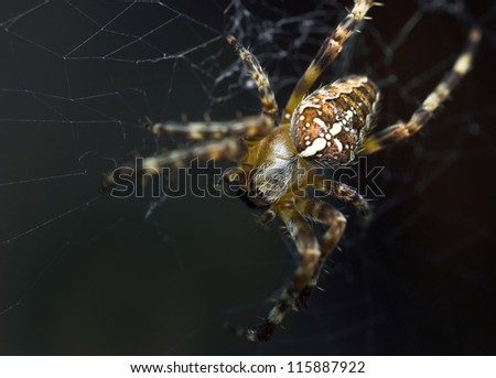 Closeup of a cross spider in its web - stock photo