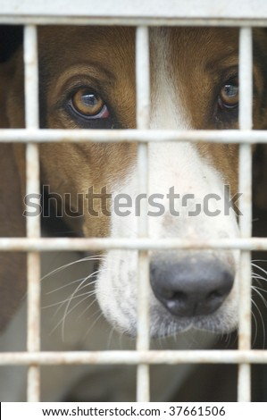 closeup of a dog cage - stock photo