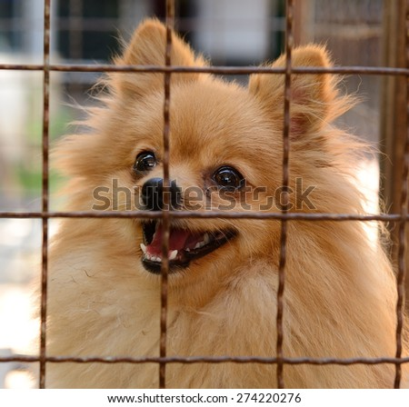 closeup of a dog in cage - stock photo