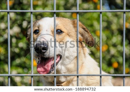 Closeup of a dog looking through the bars of a fence, outdoor