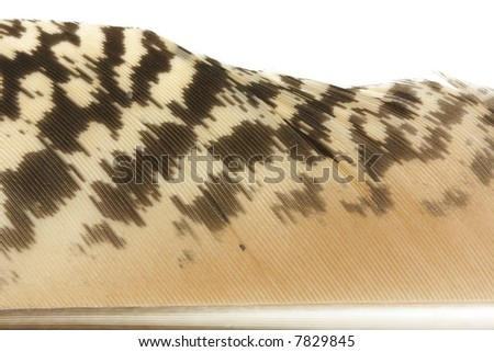 Closeup of a feather - stock photo