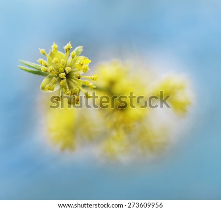 Closeup of a flourishing bud with nice bokeh - stock photo
