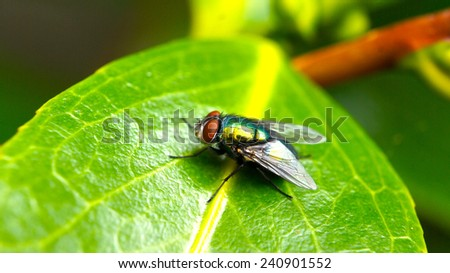 Closeup of a fly on a green leaf - stock photo