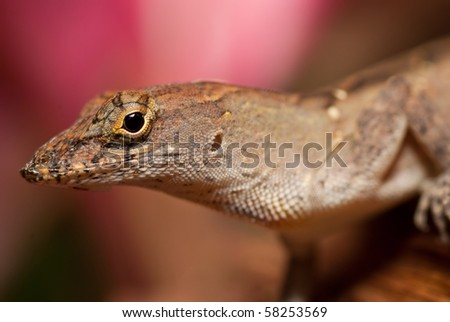 Closeup of a gray lizard on a leaf.