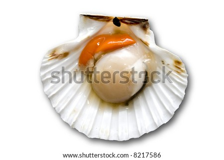 Closeup of a inside seashell (sea shell), scallop over white  background - stock photo