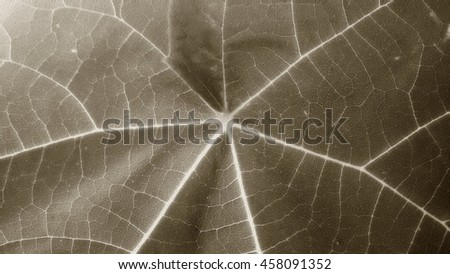 Closeup of a leaf / a green leaf with lots of veins. - stock photo