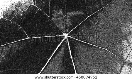 Closeup of a leaf / black and white leaf with lots of veins. - stock photo