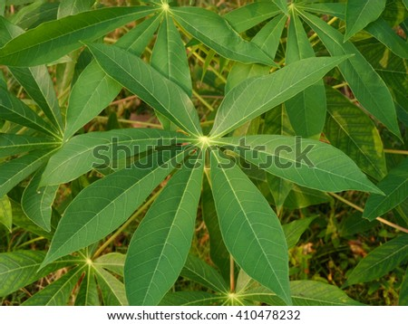 Closeup of a leaf of yucca plant - stock photo