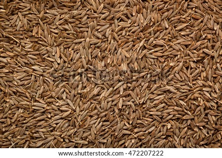 Closeup of a lot of cumin seeds