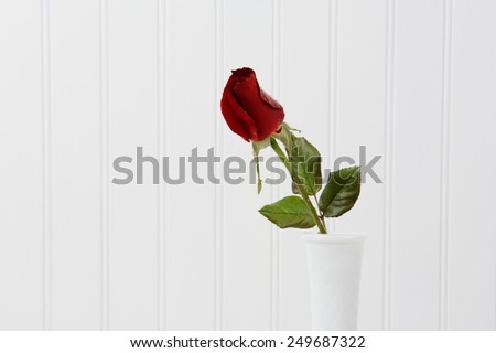 Closeup of a red rose bur with water droplets in a white vase against a white beadboard background. Horizontal format with copy space. - stock photo