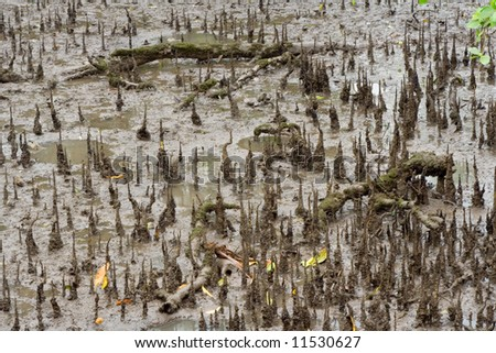 Closeup of a section of a mangrove swamp - stock photo