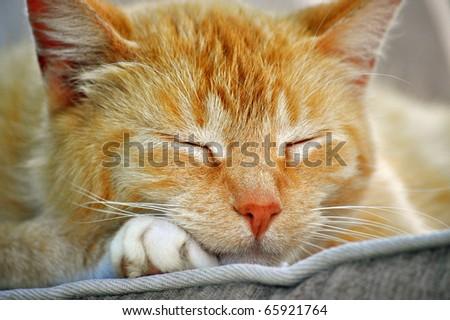 Closeup of a sleeping cat - stock photo