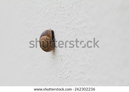 Closeup of a snail on white wall - stock photo