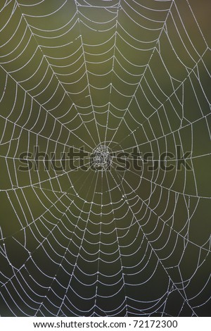 Closeup of a spider web covered in water droplets catching the morning light. - stock photo