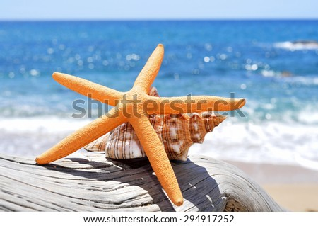 closeup of a starfish and a conch on an old washed-out tree trunk in the beach, with a bright blue sea in the background - stock photo