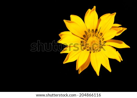 Closeup of a yellow flower against a black background. - stock photo