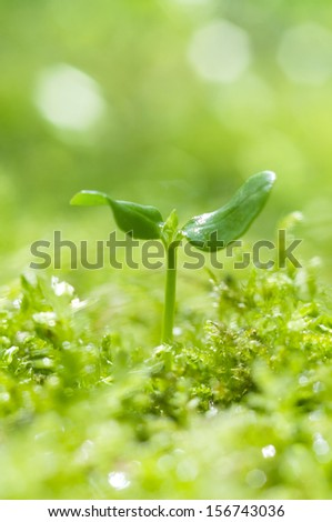 Closeup of a young growing plant - stock photo