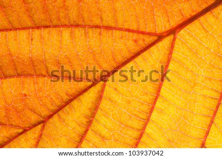 Closeup of an orange leaf texture of a plant - stock photo