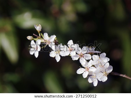Closeup of apple tree background with leaves in background - stock photo