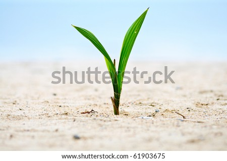Closeup of baby tree on sand