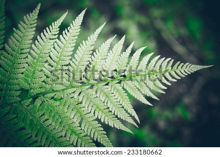 closeup of beautiful green plants with blur background. Vintage photography effect. Retro grainy color film look.