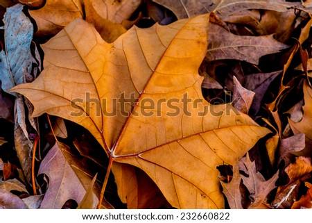 Closeup of Beautiful Intricate Fall Foliage. - stock photo