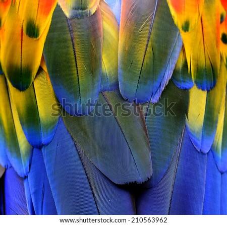 Closeup of Beautiful Scarlet Macaw bird's feathers - stock photo
