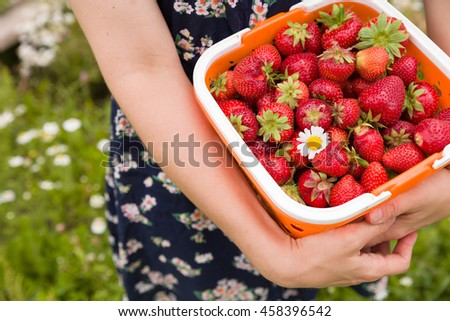 Closeup of big basket of freshly picked organic strawberry in woman's hands. Summer harvest in the garden. Healthy food concept - stock photo