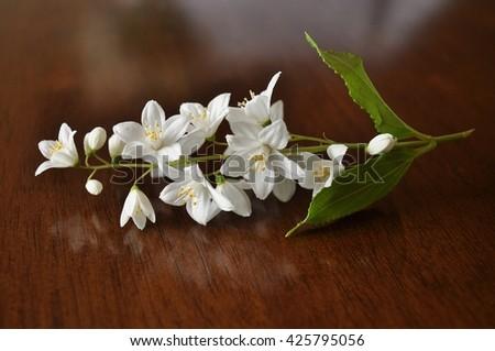 Closeup of blooming white deutzia twig. - stock photo