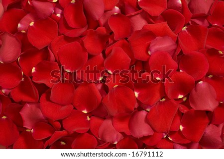 Closeup of bright red rose petals - stock photo