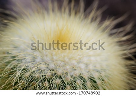 Closeup of cactus - stock photo