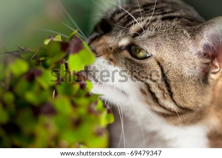 Closeup of Cat and green four leaved clover plants