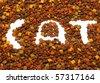 Closeup of cat food - stock photo