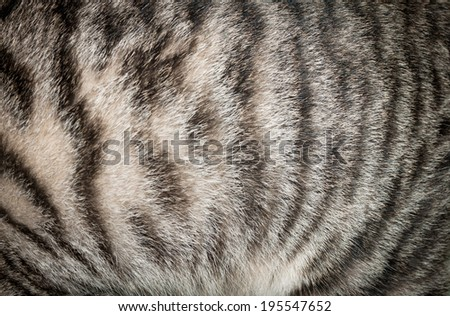 Closeup of cat pelage - stock photo