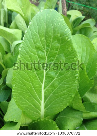 Transpiration Stock Images Royalty Free Images amp Vectors