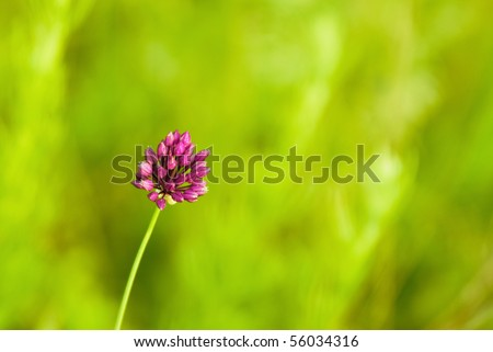 Closeup of clover on green background - stock photo