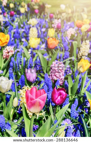Closeup of colorful spring flowers - stock photo