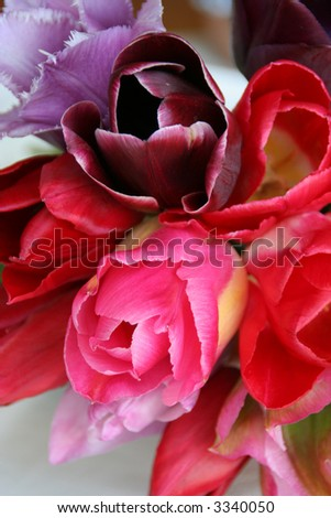 Closeup of colorful tulips bouquet - stock photo