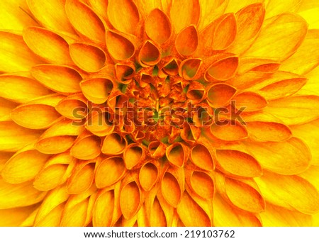 closeup of colourful flower . - stock photo
