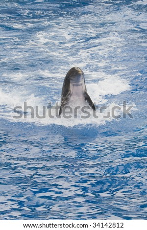 Closeup of Common Bottlenose Dolphin (Tursiops truncatus)