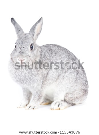 Closeup of  cute rabbit  on  white background - stock photo