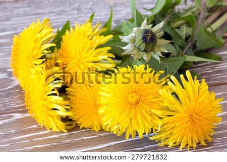 Closeup of dandelion on wooden background - stock photo