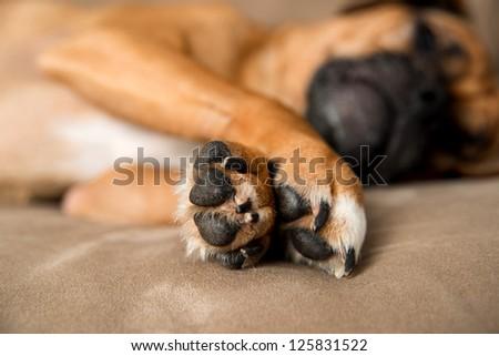 Closeup of Dog's Paws - stock photo