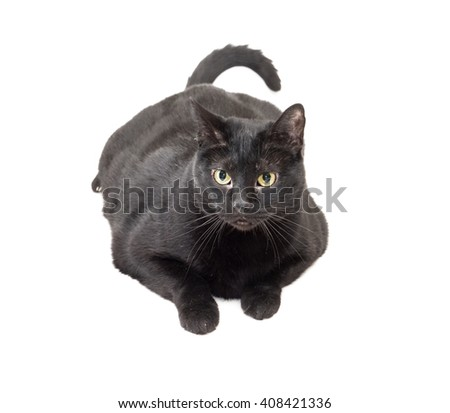 closeup of entire black cat laid down over white background - stock photo